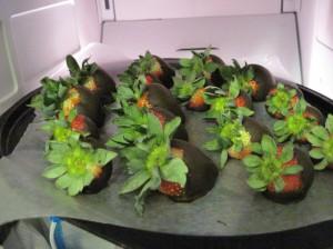 Chocolate-Dipped Strawberries Chilling Out