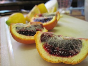 Bloody Oranges!