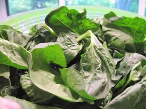 Fresh Fluffy Spinach
