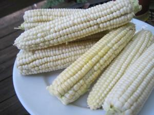 Fresh Corn!