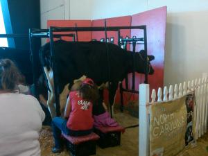 For $2, you can milk a cow!
