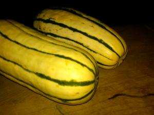 Delicata Squash, Brinkley Farms CSA Edition