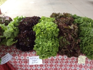 Beautiful lettuces all in a row at the Farmer's Market.