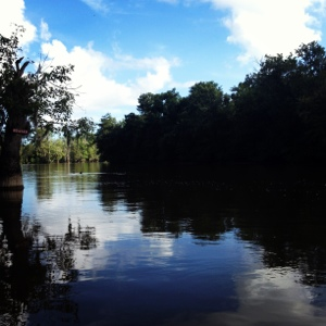 There is so much natural beauty in Louisiana--try a swamp tour if you've never gone!
